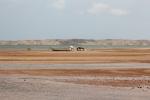 Oman: Seaside Blogs covering Muscat, Sur, Misairah